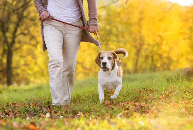 fight prediabetes by walking your dog