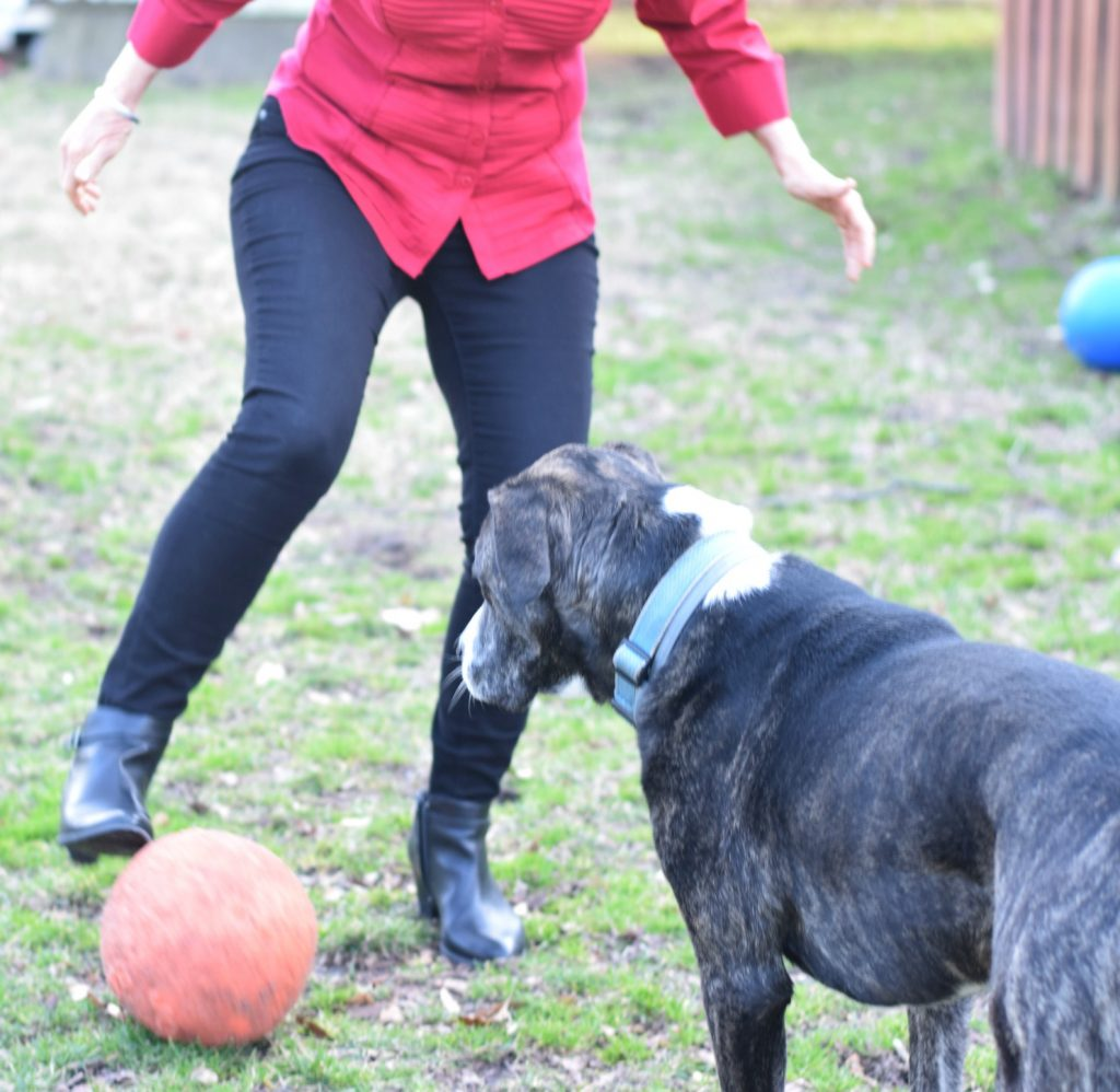 Playing soccer with a pup, a non-food coping strategy