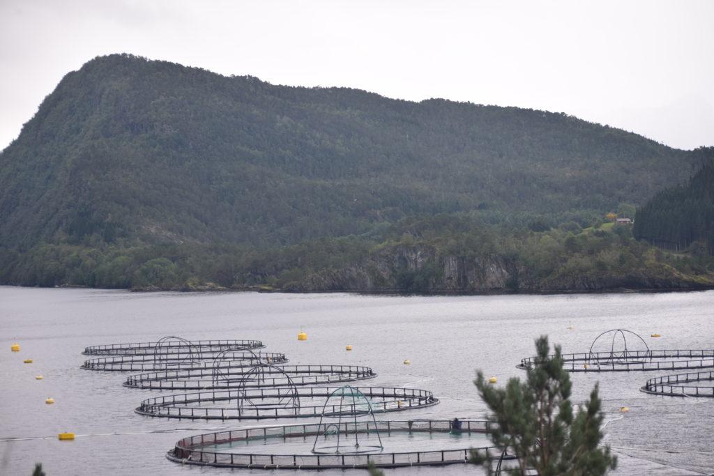 empty pens in fish farm in Norway