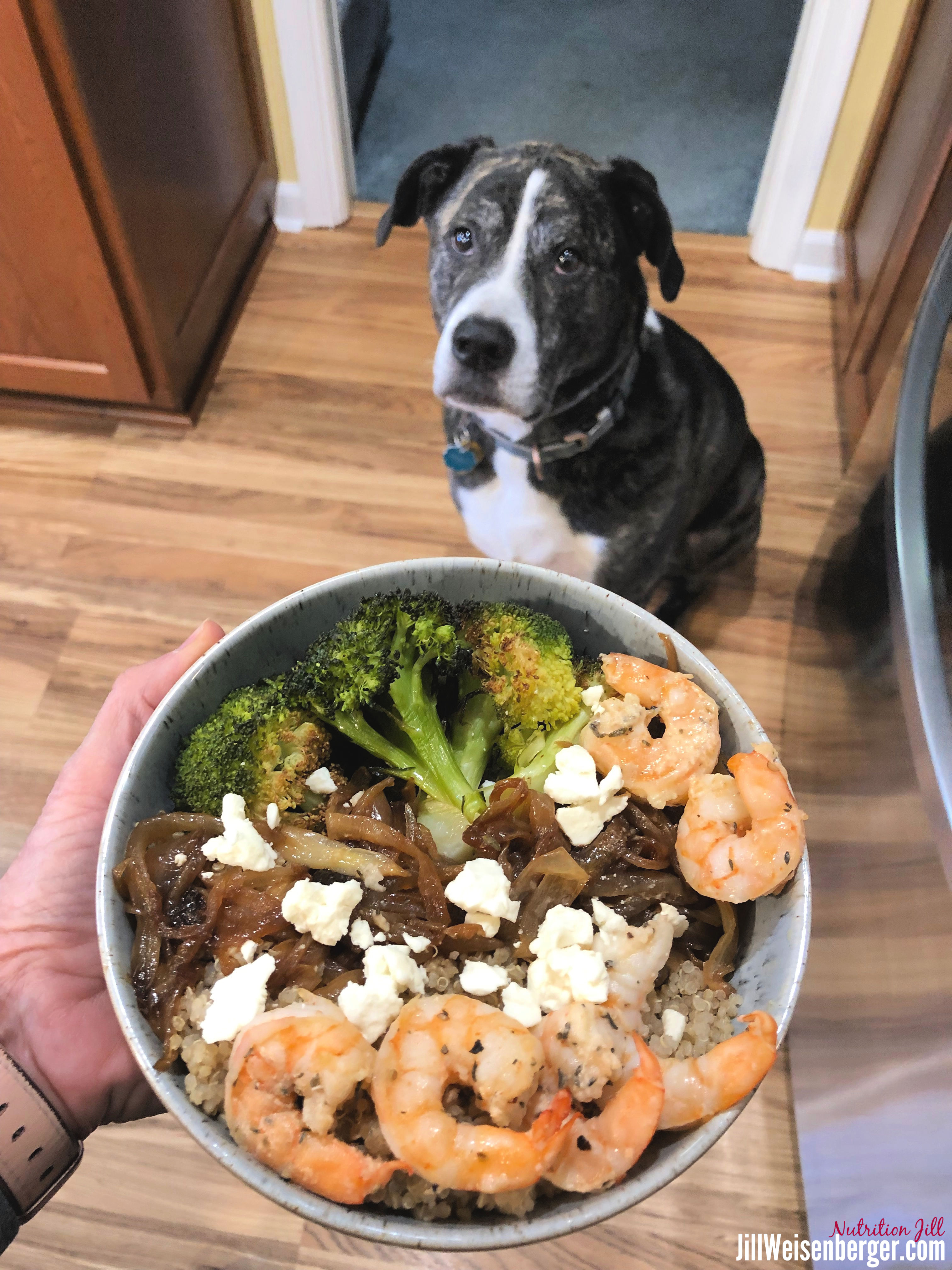 shrimp meal bowl with dog overlooking